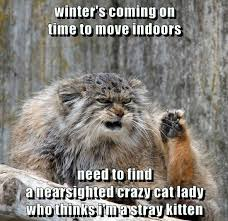 Winter Meme - winter s coming on time to move indoors need to find a nearsighted