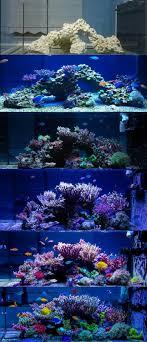 best 25 reef aquarium ideas on coral reef aquarium
