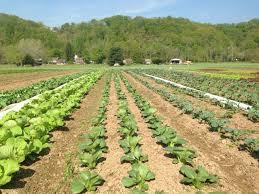 thanksgiving farm tinicum csa in bucks county