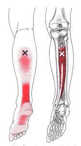 Diagram Of Knee Anatomy Best 25 Ankle Anatomy Ideas On Pinterest Foot Anatomy Ankle
