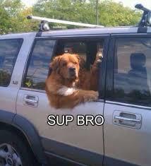 Sup Meme - 27 sup bro dog meme pmslweb