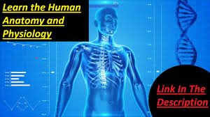 What Is Human Anatomy And Physiology Anatomy Physiology Youtube