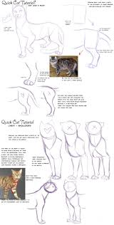 the 25 best cat anatomy ideas on pinterest cat drawing tutorial