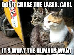 Cat Fight Meme - don t chase the laser carl funny cat meme
