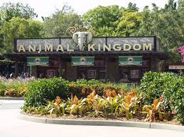 Walt Disney World Map by Walt Disney World Animal Animal Kingdom Map Southtracks