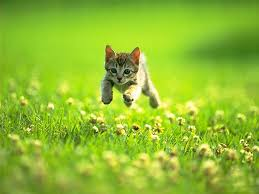 the meaning of the dream in which you saw kitten
