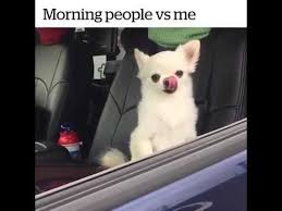 Not A Morning Person Meme - morning people vs me youtube