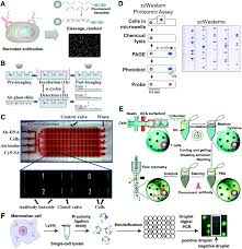 microchip based single cell functional proteomics for biomedical