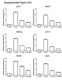 the molecular mechanism of ethylene mediated root hair development