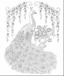 superb peacock coloring pages printable with hard coloring