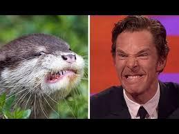 Benedict Cumberbatch Otter Meme - benedict cumberbatch is an otter youtube