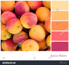 apricot background colour palette complimentary swatches stock