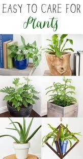 Easy Care Indoor Plants 395 Best Indoor Gardening Images On Pinterest Plants Indoor