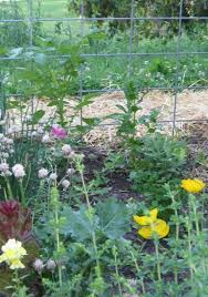 convert your lawn to a no till permaculture garden organic