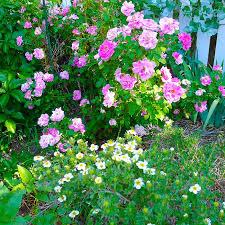 Garden Shrubs Ideas Mountain Gardening Make The Most Of Shrubs In Your Garden