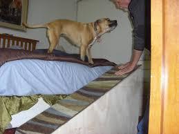 Dog Steps For High Beds Dog Steps For High Beds Ideas Home Decor U0026 Furniture