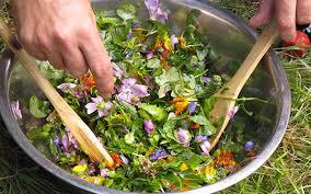 cuisiner les herbes sauvages cuisiner les plantes sauvages bien être au naturel