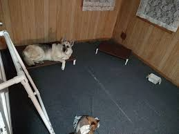 Cats In Dog Beds Build A Dog Cot For Around 10 15 Steps