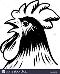 a black and white drawing of a rooster stock photo royalty free