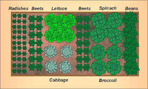 Garden Layout Fall Vegetable Garden Layout For A 4 X8 Raised Bed Growing The