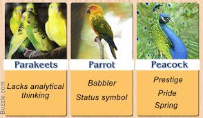 pretty enthralling bird symbolism and their meanings