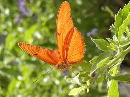ten butterfly facts to and tell