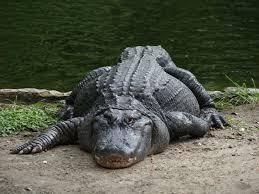 Mississippi wild animals images 100 best arkansas wildlife images arkansas wild jpg