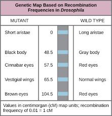 chromosomal theory and genetic linkage boundless biology