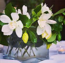 gardenia flower premium gardenia flowers in a box best luxury gardenia box