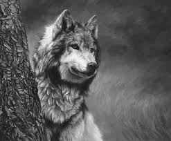 gray wolf black and white painting by bilodeau