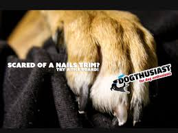 training tips tuesday dog scared of nail trims train your dog to