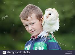 Owl Shoulder - a barn owl sitting on a boy s shoulder at a country park in