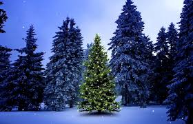 snow decoration winter christmas tree serenity sky nature decoration forest