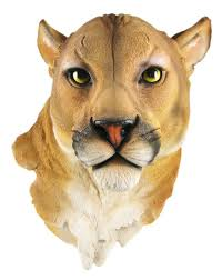 amazon com mountain lion head mount wall statue bust home u0026 kitchen