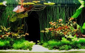 misc mini aquarium design aquariums water nature fish tank full