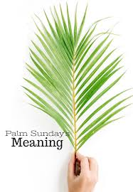 palm for palm sunday palm sunday s meaning stonegable