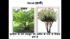 science types of plants प ध क प रक र hindi