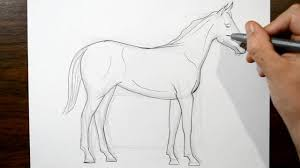 how to draw a horse real time drawing youtube