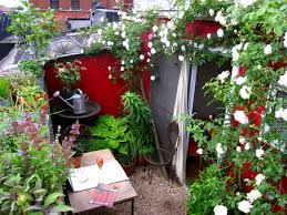 66 square feet plus roof garden roses