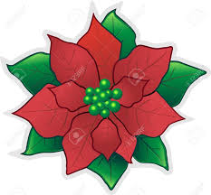 poinsettia flower images u0026 stock pictures royalty free poinsettia