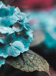 teal flowers teal free pictures on pixabay