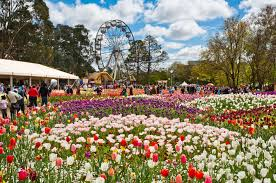 australian garden flowers floriade vs toowoomba carnival of flowers