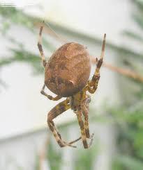 help spider identification archive whiteblaze