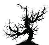 free scary tree 1 stock photo freeimages