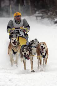 dog sled racing information and pictures
