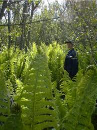 Under Canopy Rainforest by 2015 Articles Kenai U S Fish And Wildlife Service
