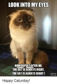 Works For Me Meme - lookinto my eyes nowirepeat after me the cat isalways right the