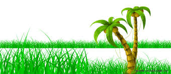 coconut trees grass vector graphic graphic hive