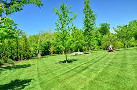 Superior Lawn And Landscape by Lawn Landscaping Stripes Of Green Trexlertown Pa