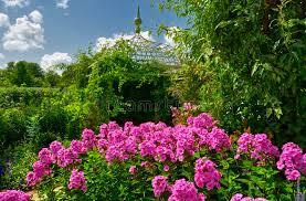 Phlox Flower Phlox Flower In English Garden Stock Photography Image 10497952